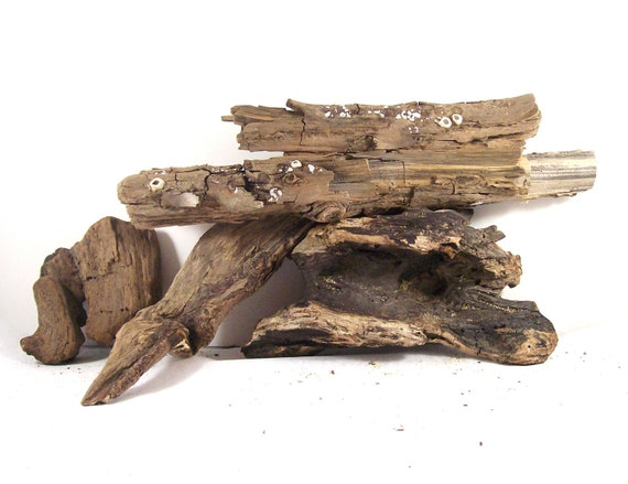 Driftwood for Art or Decor