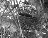 Reserved listing--Empty Nest--Fine Art Photograph