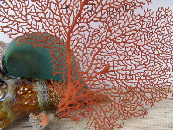 Red Sea Fan Coral Beach Decor, number 8