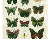 Butterfly Leaves, 11x14 Limited Edition Art Print