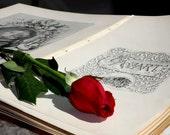 Mozart - red rose -fine art photograph - 8 x 10