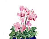 Valentine sale Cyclamen in blue planter original  watercolor painting , Still Life. Valentine's day , mother's day, Blue Pink green ,