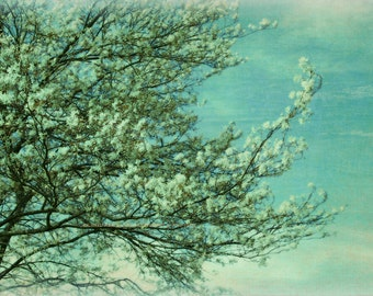 WHITE VINTAGE BLOSSOMS Abstract Textured Flower Original Nature Photograph
