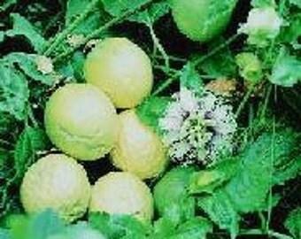 20 Lilikoi seeds - yellow passion fruit, passiflora edulis flavicarpa from Hawaii