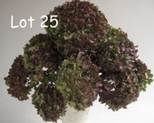 11 Dried Hydrangeas Purple and Green