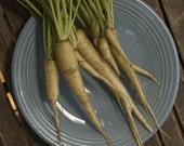 Organic Belgium White Carrot Seeds