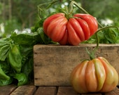 Organic Zapotec Pleated Tomato Seeds - cubits