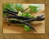 Photo - Purple Pole Beans - Photo Print Postcard - Food Photography