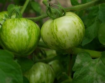 Zebra Stripe Green Tomato Seeds