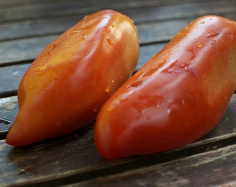 San Marzano Tomato Seeds - Italian Sauce and Paste Tomatoes