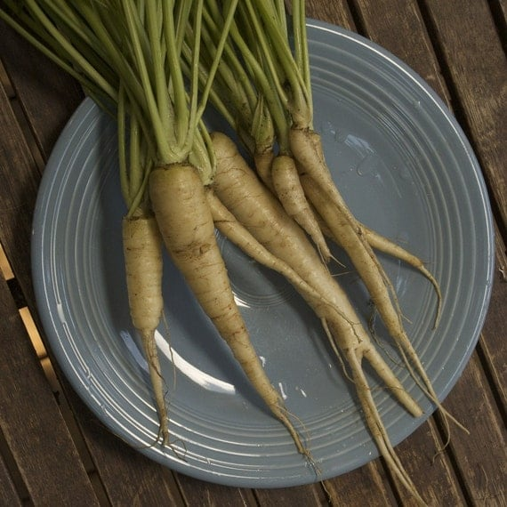 Lunar White Carrot Seeds