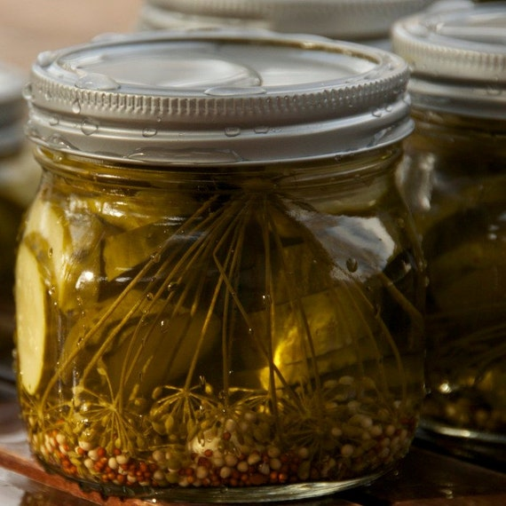 Organic Pickling Cucumber Seeds - A and C Cuccumber