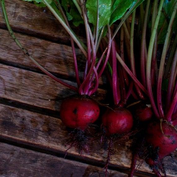 Organic Early Wonder Tall Top Beet Seeds
