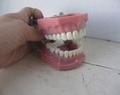 Chew On This.... Vintage Dental School Teeth