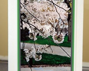 Cherry Blossoms in Washington D.C. 5 x 7 inch Spring Greeting Card