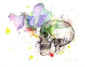 Skull in a Splash of Color Watercolor Painting Fine Art Print