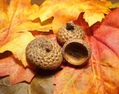 ACF-100FC 100 Flat Natural Acorn Caps (Acorn Hats), Perfect For Woodland Fall Crafts, Doll Making, Eco-Friendly, 3.75 Shipping