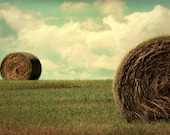 Late Harvest - Fine Art Photograph - 10x14