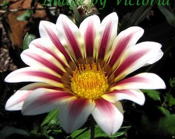 Sunshine Daisy Flower Fine Art  Photo Meditation  Mandala Art  Photo Series  Floral Wall Decor  8x10