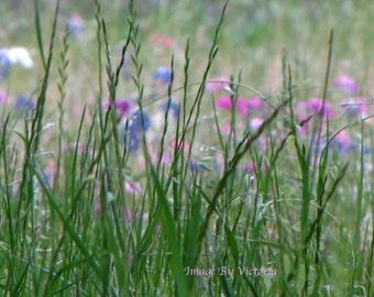 Wildflowers  Pink & Purple  Fine Art Photography -  Field Of Love- Nature Wall  Decor Art Flowers Nature's Beauty - Flower Photo