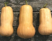 Heirloom Seeds, Organic Seeds, Waltham Butternut Squash seeds, from our farm, gardener gift, eco friendly, gardening, vegetable garden