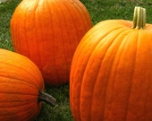 Organic Vegetable Seeds, Jack O Lantern Pumpkin, heirloom seeds from our farm in handmade seed packets