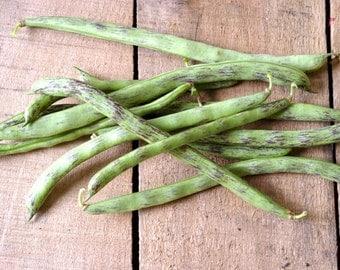 Rattlesnake Pole Bean // organic heirloom seeds // vegetable seeds from our farm // gardener gift // vegetable seeds // organic gardening
