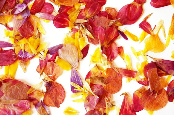 Organic Flower Petals, naturally dried and pressed, harvested on our small scale farm