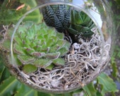 Personal Succulent Garden In A Hanging Glass Bubble Globe
