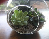 Succulent Terrarium Glass Globe Hanging Garden, Makes A Great Gift