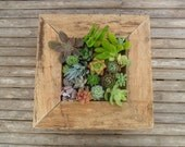 Large RUSTIC Wall Art Kit, Comes Assembled With Soil And Moss, 20 Cuttings To Get Started, Housewarming  Gift