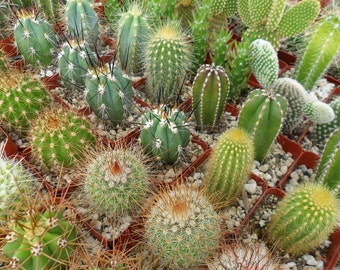 3 Assorted Cactus Plants, Have A Margarita Party, Rustic Wedding, Dish Garden, Sothwest
