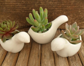 3 Succulent And White Ceramic Bird Favors, Succulent Favors, Wedding And Party Favors, Great Table Decor, Special Event