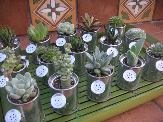 Reserved For Lisa, 150 Watering Can Favors With Succulents, Grat Favors, Ship Date September 26