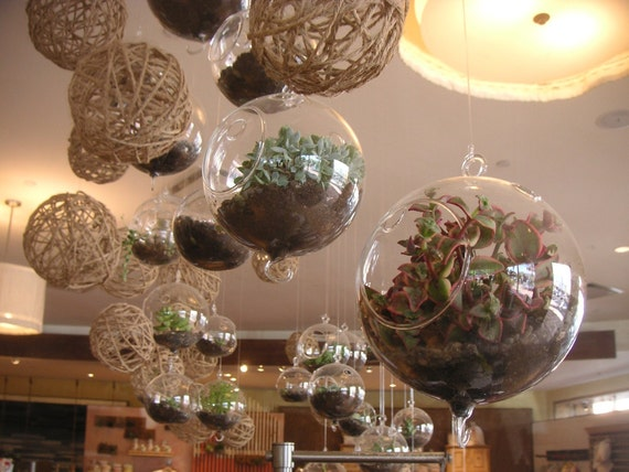 DIY, 6 Succulents And 2 Glass Globes For Terrarium Projects, Hanging Gardens, Create Your Own Gifts
