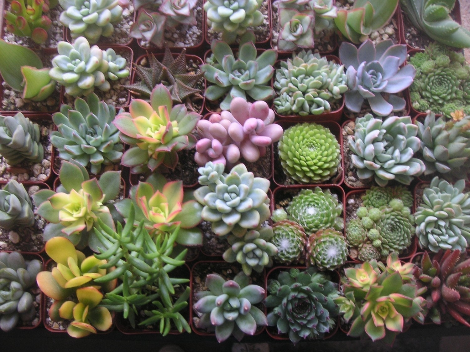 A Collection Of 12 Succulent Plants Unique Wedding Baby