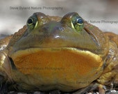 SALE - Frog Lovers Three Photo Pack - THREE 4X6 Matted Signed Photos - Free Shipping to the U.S.