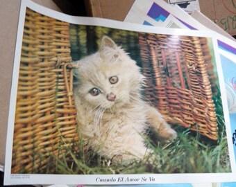 Vintage 1980's Kitten poster print - Cuando el amor se va
