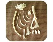 Specimens - Rodent Bones and Mink Teeth - Qty. 13 - Lot 1142