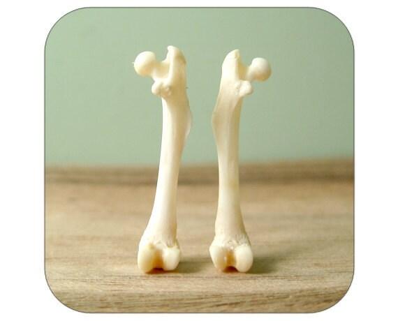 Specimens - Tiny Real Bones - Femurs - Qty. 2 - Lot 1228
