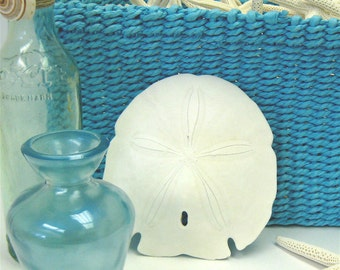 "Beach Coastal Decor - 3 Large Arrowhead Sand Dollars - 3"" - 4"" - nautical bulk shells sea shells"