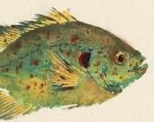 Shellcracker - Gyotaku Fish Rubbing - Limited Edition Print (11.5 x 7.5)