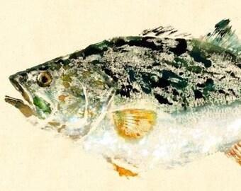 """Largemouth Bass - """"Unlucky"""" - Gyotaku Fish Rubbing - Limited Edition Print (20.5 x 11)"""