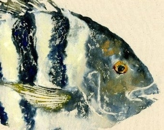 "Sheepshead - ""Convict"" - Gyotaku Fish Rubbing - Limited Edition Print (18.25 x 11)"