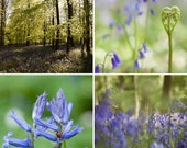 Bluebell Collection - set of 4 notecards
