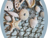 Seashells - 1 Dozen Starfish and Shell Stems - Wedding Bouquets and Centerpieces - white cotton covered wire for you bouquets