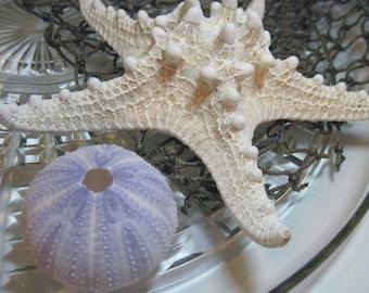 Knobby Starfish - White Sea Star - Wedding Starfish - Large Knobby -  Beach Wedding Stars - White Decor - 6.5 inch