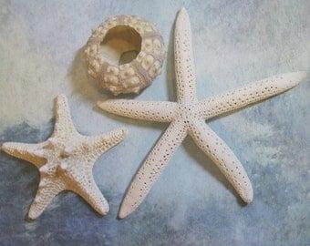 White Starfish with Sea Urchin - White Sea Star - Fingerling Starfish - Pencil Starfish - Sputnik Sea Urchin
