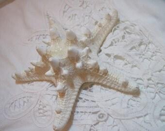 Knobby White Starfish Sea Stars - 5 1/2 inch