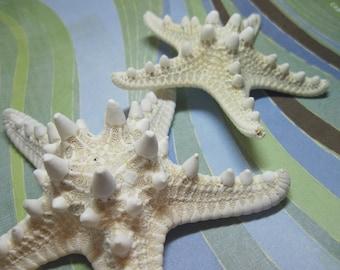 2 White Knobby Starfish Sea Stars